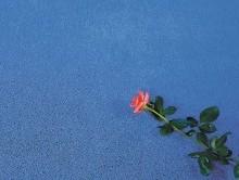 EXCELSİOR GECE MAVİSİ | Duvardan Duvara Halı | Samur