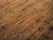 ID Premier Wood 2910 | Pvc Yer Döşemesi